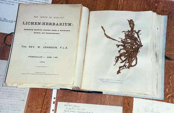 Herbaria - Johnson exsiccata