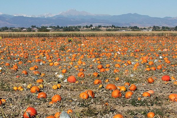 pumpkins_view